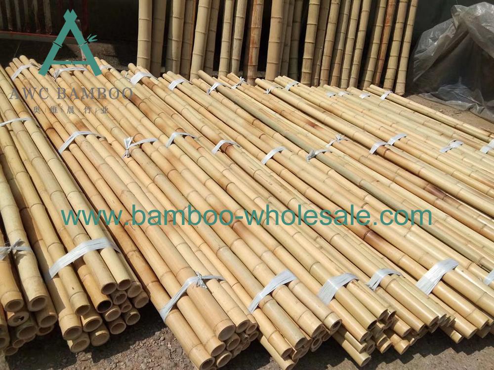 Moso Polu di bambù