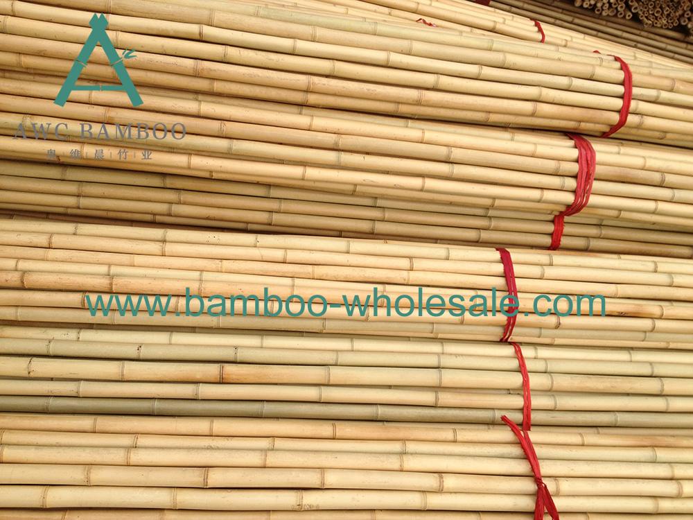 Моза бамбукавыя палякі